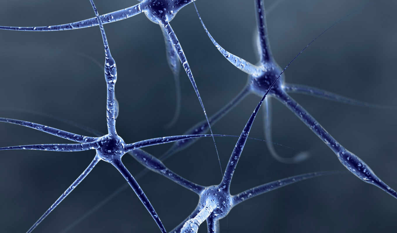 нейроны, клетки, вид, сборник, мозг, мозга, имплантат, ученые, изобрели, прекрасных, рукой, глазом, виртуальный, turbobit, модель, помощи, отличных, sales, business, dfiles, инновационные, исследовани