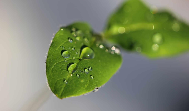 waterdrops, heart, tweet, pin, resolutions,