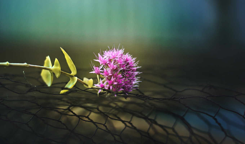 ,цветок, макро, сетка,