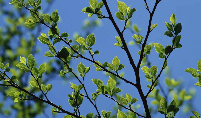 небо, листья, весна, смотрите,