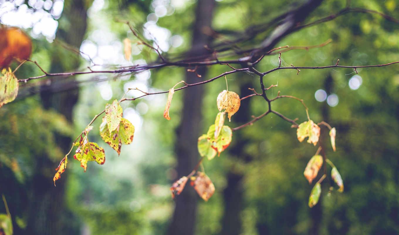 листья, ветка, дерево, размытость, боке, настроение, картинка, осень,