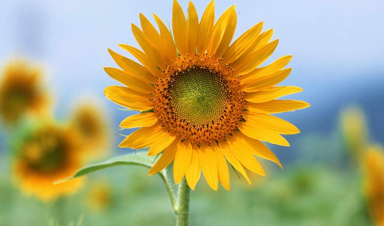 hoa, hương, dụng, trải, yêu, mắt, của, tình, rực, ta, trong,
