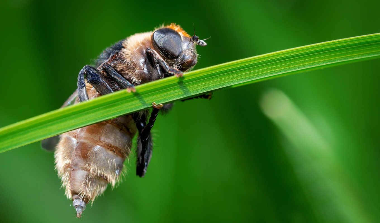 ultra, насекомое,