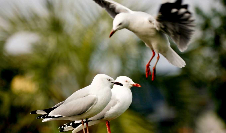 птица, animals, birds, amazing, white, get, парковка,
