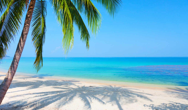 море, пляж, palm, landscape, пальмы, песок, отражение, картинка,