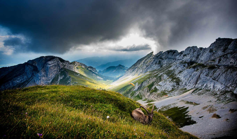 горы, пилатус, швейцария, гора, долина, mount, козел, animal,