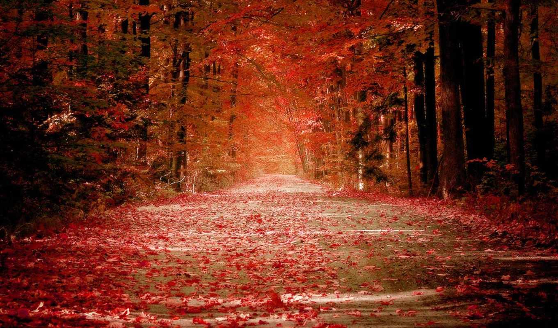осень, лес, самые, красивый, красивые,