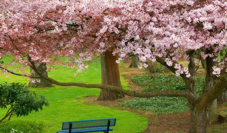 park, парки, мира, парке, anime, дневник, шшш, природа,