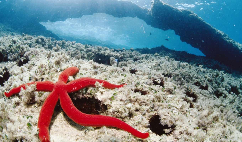 ocean, animals, fishes, море, fish, underwater, природа, mobile,