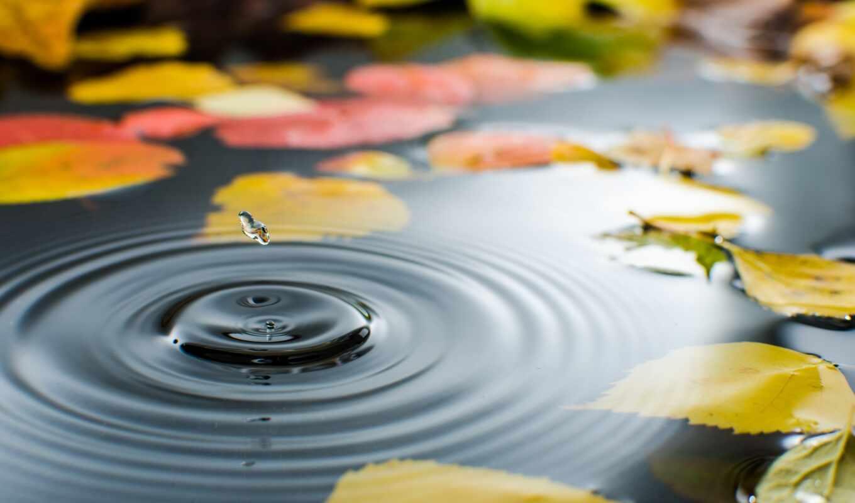 осень, лужа, water, drop, лист