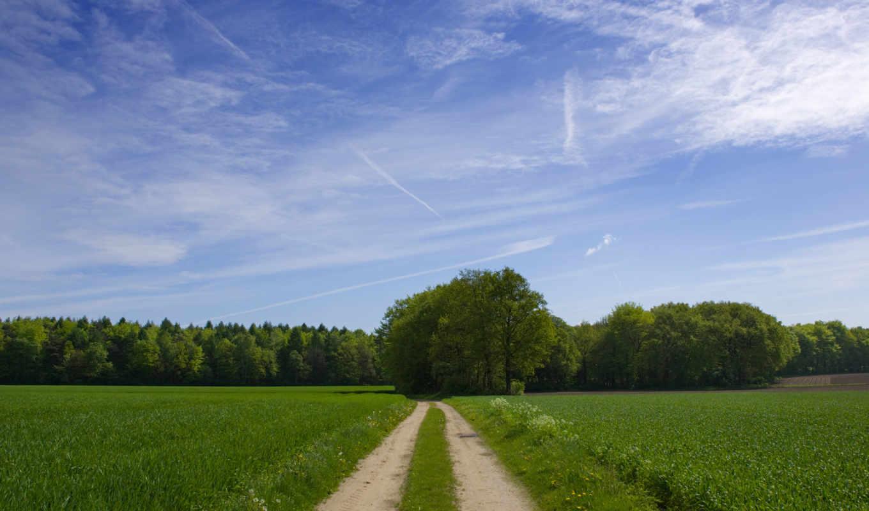 лес, трава, дорога, дятлицы, участок, картинка, nature,