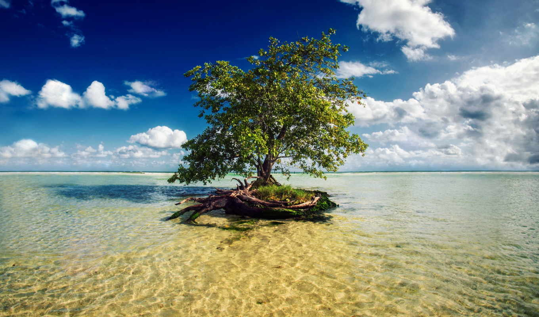 sea, tree, море, островок, дерево,