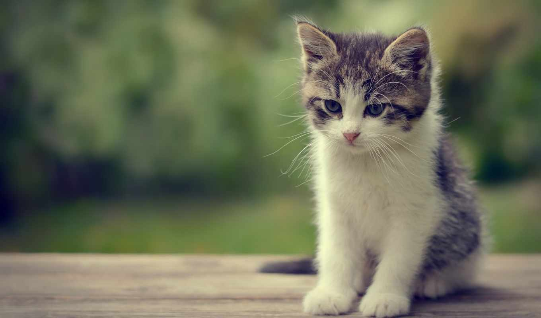 cute, котенок, kittens, desktop, animals,
