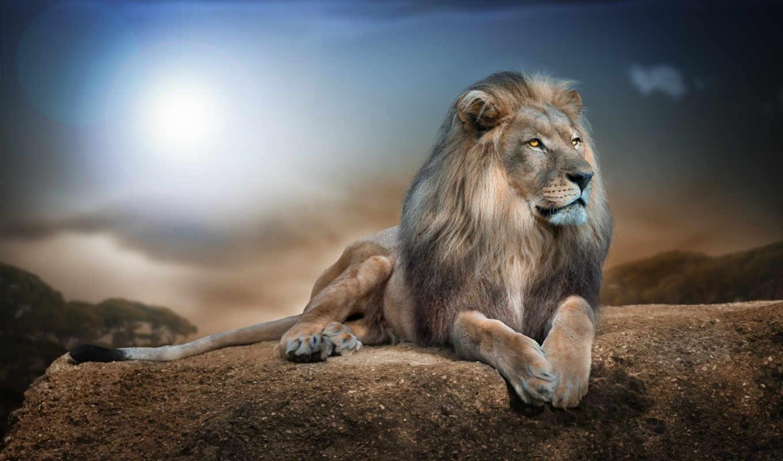 lion, king, зверей, like, cats, животные, африка,
