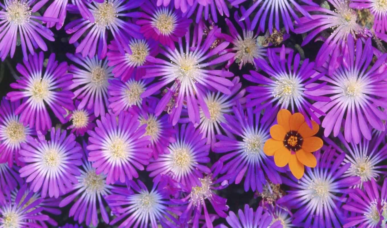 цветы, красивые, красивых, подборка, девушек,