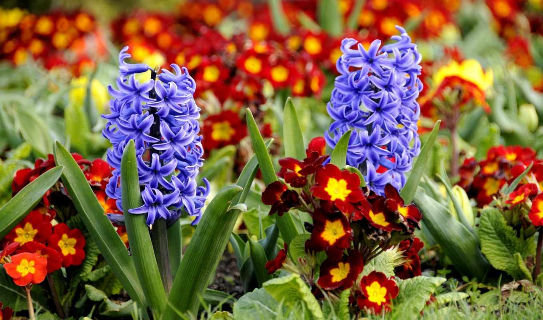 цветы, виды, весенние, розы, ромашки, тюльпаны, есть, одуванчики,