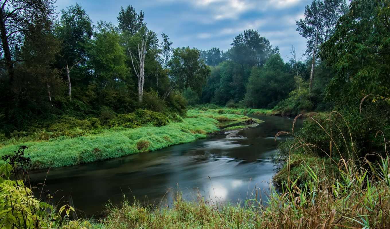 лес, columbia, british, река, природа, канада,
