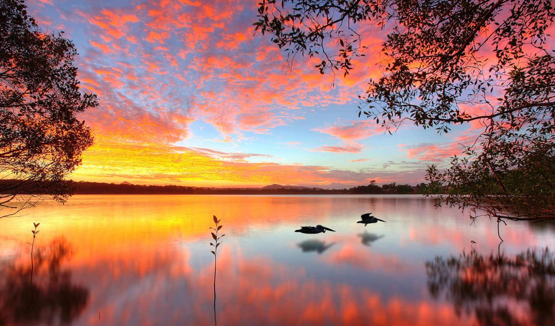 природа, птицы, подборка, красивых, красивая, со, комментарий, admin, девушек, австралийским,