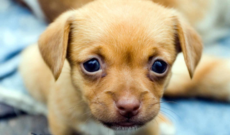 собака, dogs, взгляд, щенок, собаки,