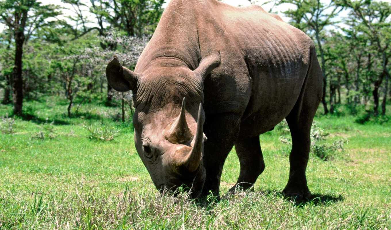 носорог, зооклубе,