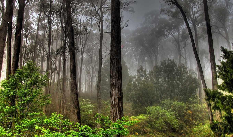 природа, подборка, full, красивые, качественных, trees, мрачные,