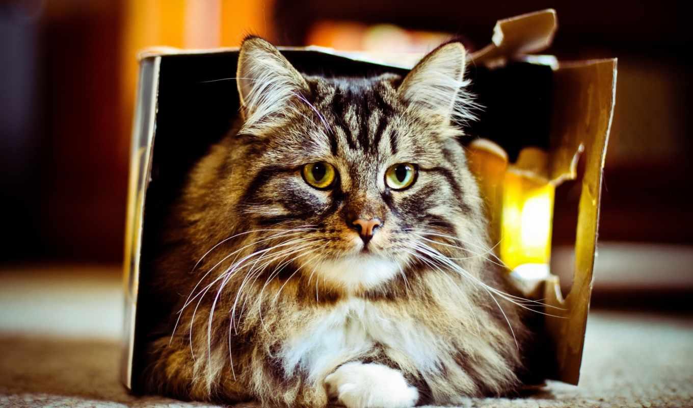 коробка, кошка, desktop, дом,