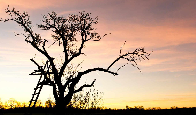 дерево, закат,
