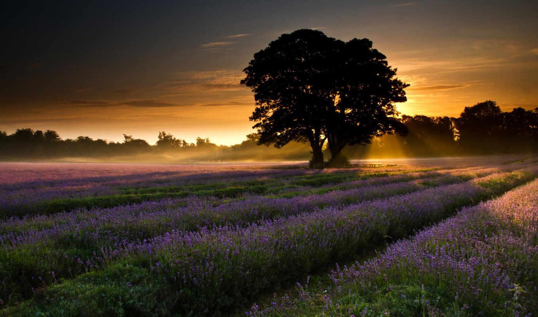 дерево, поле, цветы, закат, лес