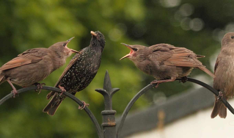 birds, birdy,