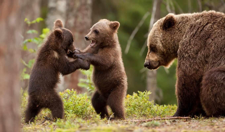 медведь, funart, medvezhonok