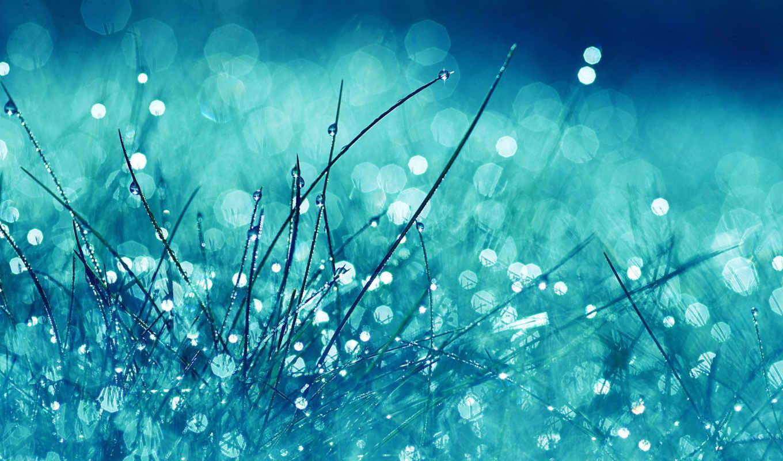 трава, цветы, взгляд, синяя, blue, яркий, воды, капельками, сказочная,