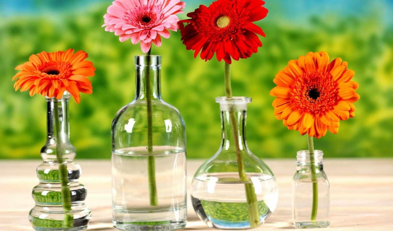 герберы, cvety, хризантемы, яркие,