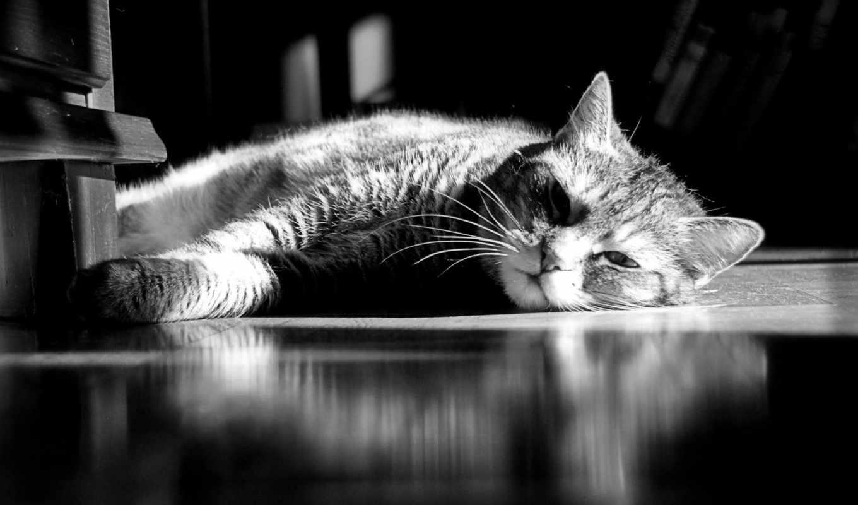 июня, kot, кошка, полосатый, нас,
