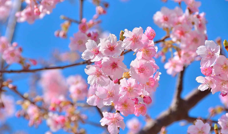 весна, цитатник, марта, весенние, целикомв, community, сообщения, Сакура, цитата, прочитать, свой,