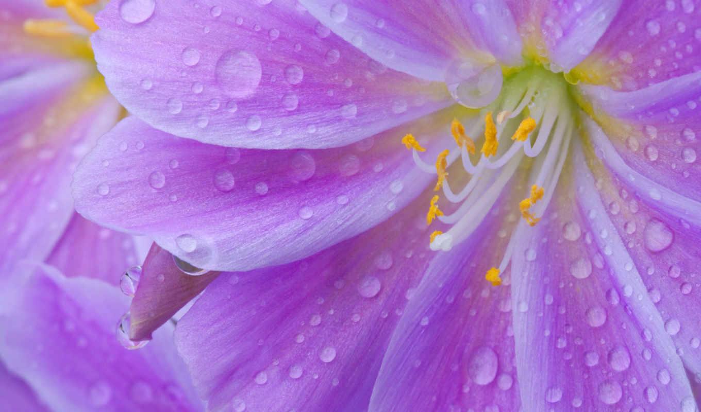 цветок, лепестки, дневник, фотографий,