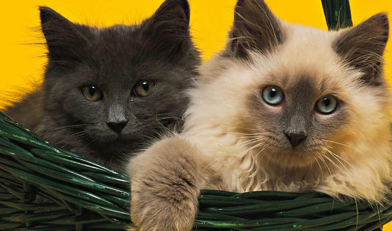 пушистые, котики, кошки, корзине, травка, trees, солнечный, весна, branch, дек, свет,