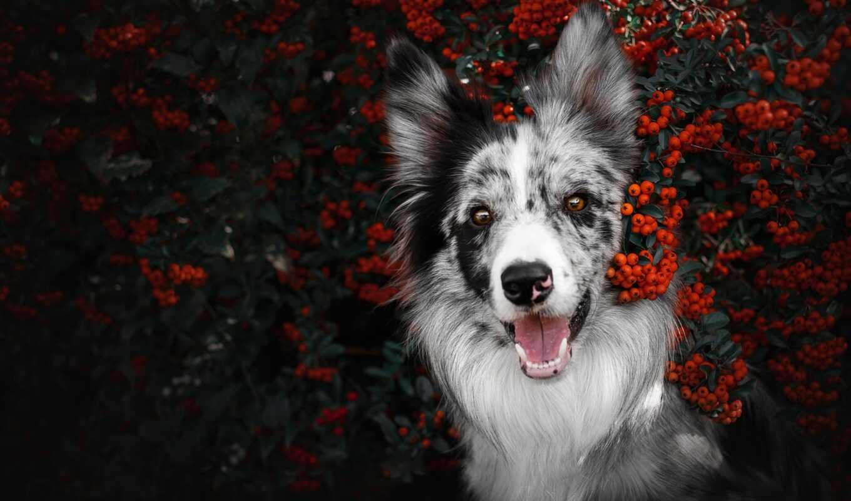 зуб, canine