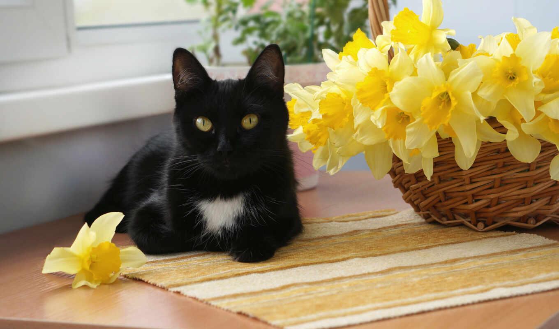 кот, цветы, white, black, oir