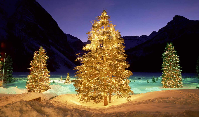 зима, елка, свет, подсветка, ночь, новый, год, новогодние, ялинки,