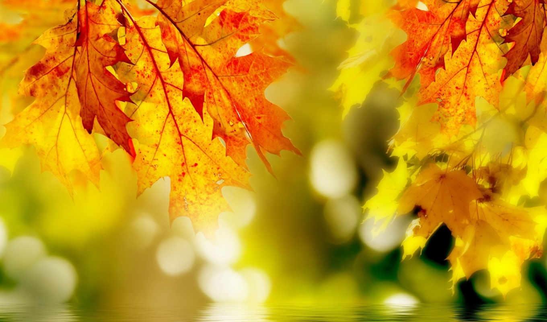 макро, желтые, водой, листья, над, фотографии, leaf, картинка, природа,
