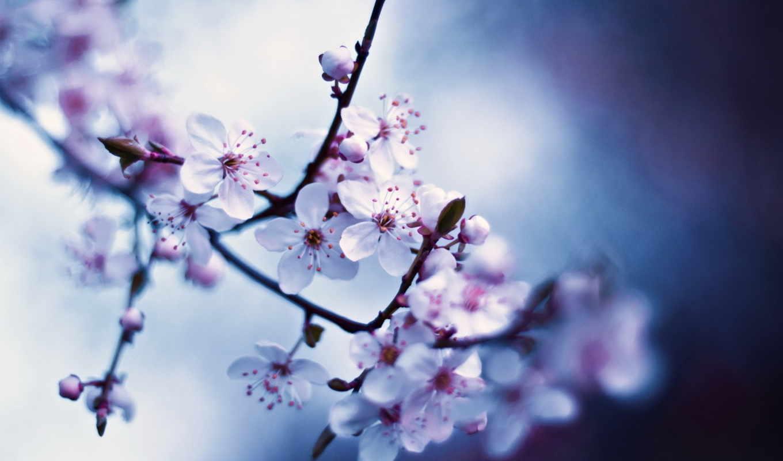 макро, цветы, весна, цвета,