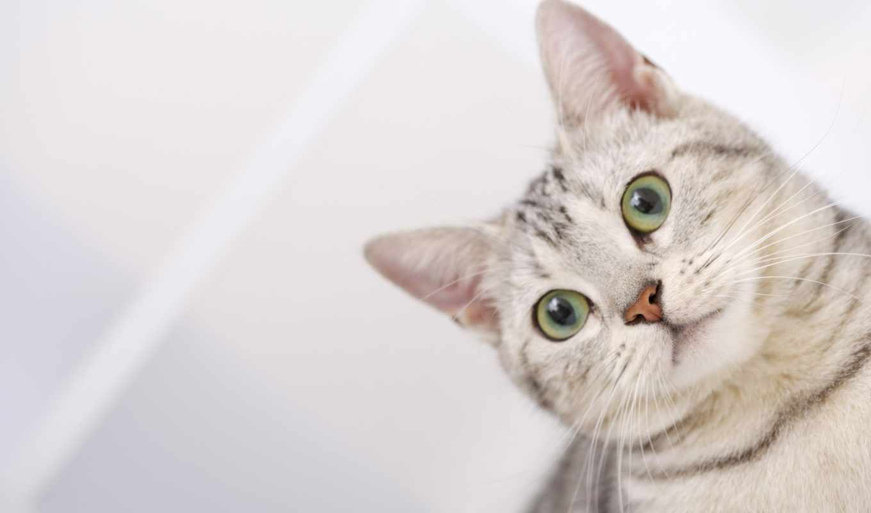 кошки, кот, коты, zhivotnye,