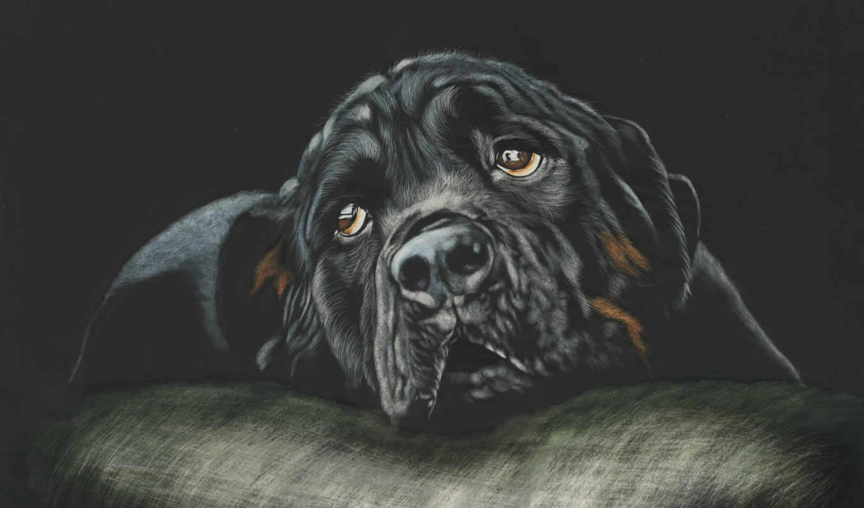 rottweiler, собака, собаки, день, zhivotnye, black, resolution,
