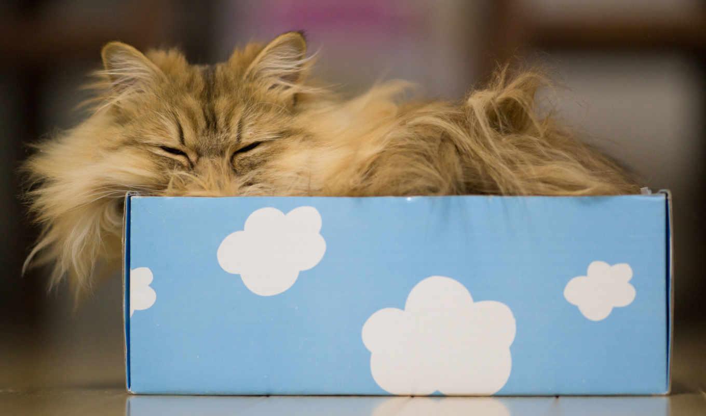 кот, котенок, фото, lovely, изображение, para, torode,