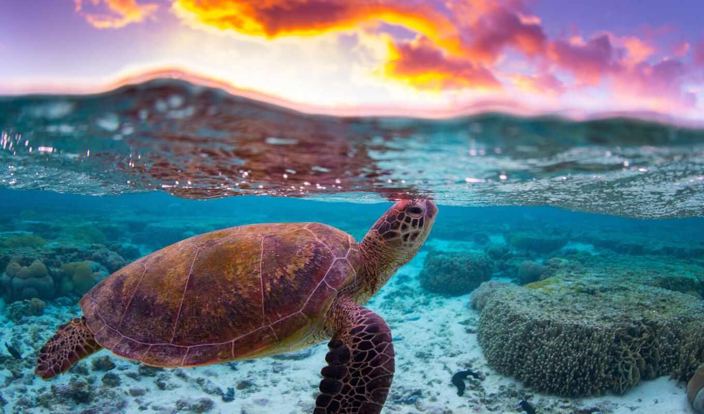 сказание, черепаха, vkontakt, море, journey, coglasnyi, лодка, planet, tourism, ristikent