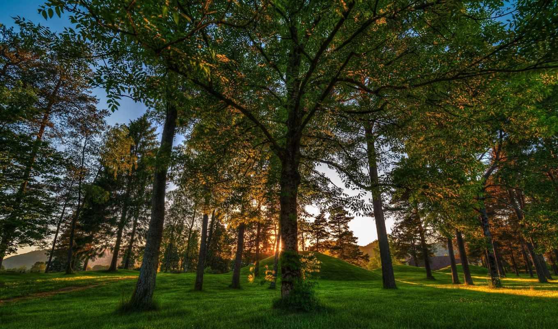 природа, деревья, лес, landscapes, norway, завантажити,