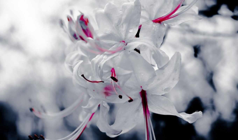 цветы, макро, white, марта, растение,