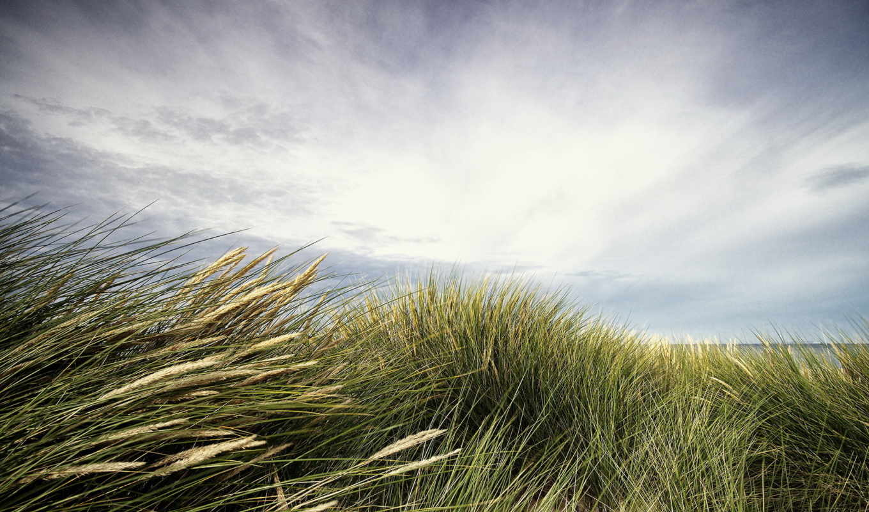 landscape, трава, bokeh, пляж, море,
