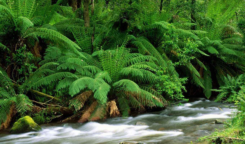 пейзажи -, лесов, landscape, растительность,