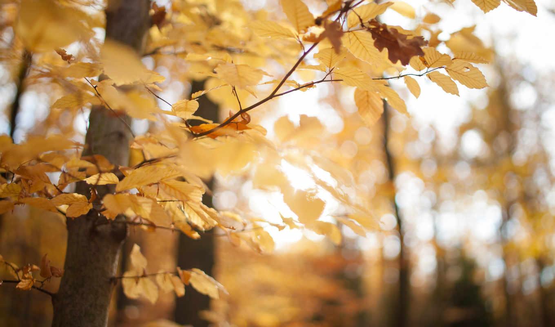 nature, autumn, желтый, листья,